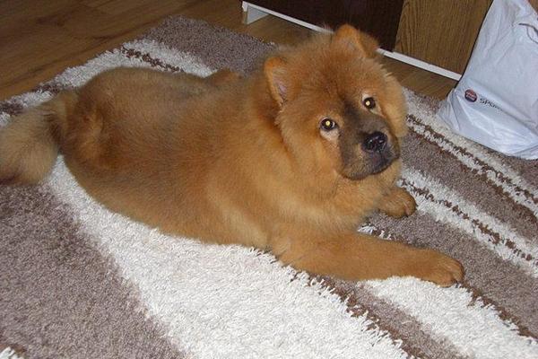 aleks il cane di boriana