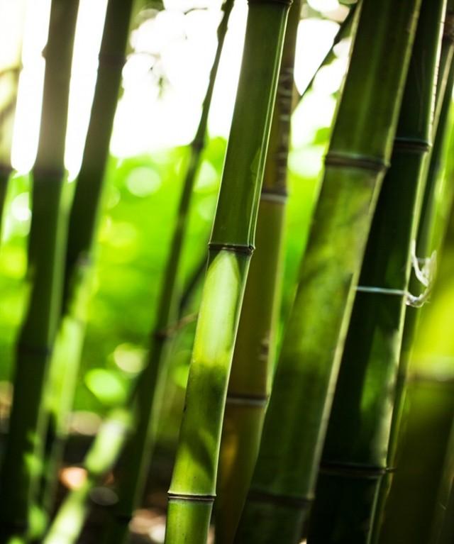 Come imparare a raggiungere i propri obiettivi da un coltivatore di Bambù