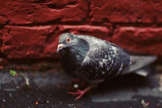 Gli aspetti più importanti dell'algoritmo pigeon