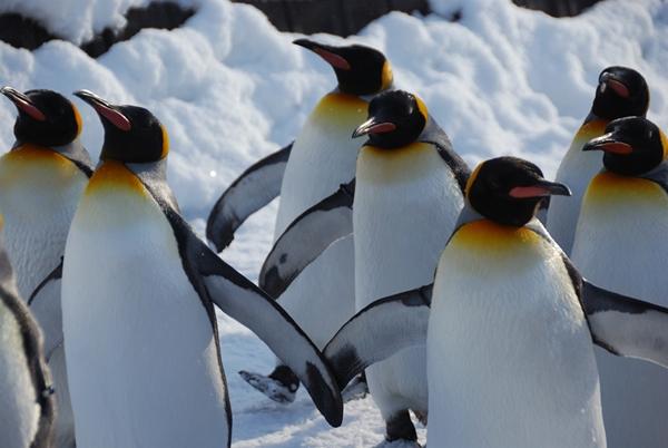 L'impatto di penguin 3.0 in tutto il Mondo
