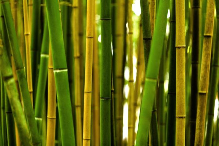 chiedi ad un coltivatore di bambù come ottenere successo