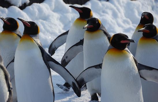 Google aggiorna penguin a fine 2015