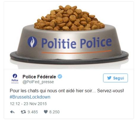 gattini-su-twitter-mobilitazione-social